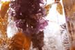 Leinwanddruck Bild - spring flowers are frozen in the ice