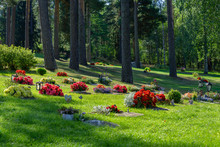 Rows Of Graves With Beautiful And Colorful Flowers In Sunlight