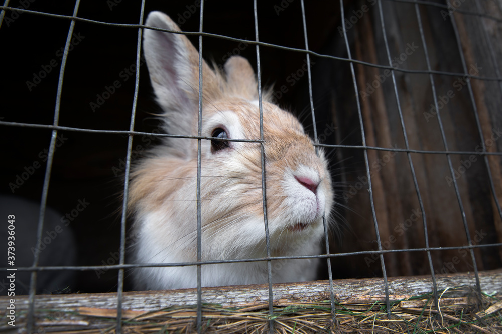 Rabbit in a cage close up. Rabbit in the zoo.