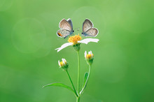 Two Butterflies Are Hanging O...