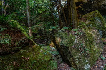 Natural scenic views while hiking along the trails in Hocking Hills State Park in Ohio.