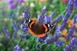 canvas print picture - Schmetterling 761