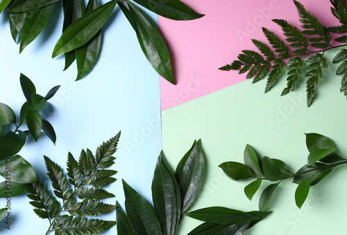green branches leaves for organic background Canvas Print