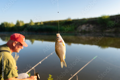 Fototapeta Crucian fish caught on bait by the lake, hanging on a hook on a fishing rod, in the background an angler catching fishes