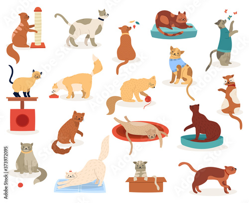 Cartoon Cats Cute Kitten Characters Funny Fluffy Playful Cats Pedigree Breeds Pets Adorable Kitty Pets Vector Illustration Icons Set Kitten And Cat Pet Animal Breed Fluffy Domestic Feline Buy This Stock