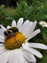 Bee Landed On A Flower