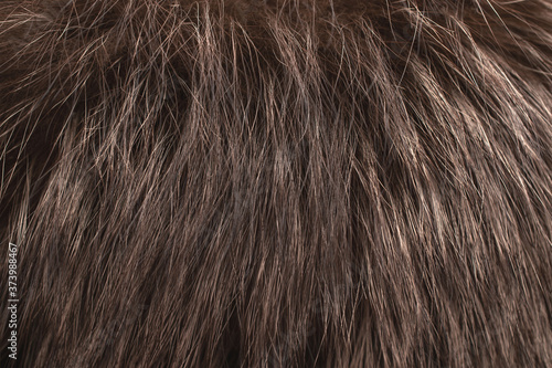 Brown fur as background. Close up Fototapeta