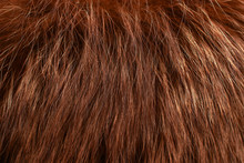 Red Fur As Background. Close Up
