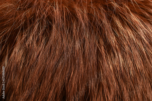 Obraz Red fur as background. Close up - fototapety do salonu
