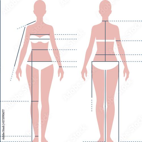 Female body for measuring the size vector illustration Fotobehang