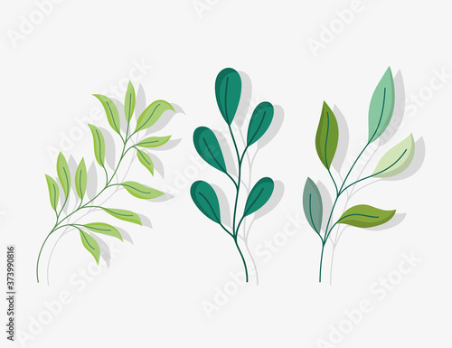 Fotografiet foliage branches leaves nature botanical icons