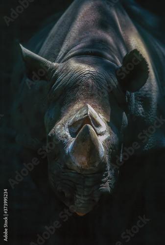 Fotografiet Rhinoceros