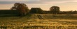 canvas print picture - Getreide Feld, Panorama, Banner