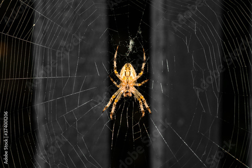 Fotografie, Obraz The spider sits on a web and hunts, waits for prey to fall into its trap