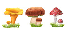 Set Of Hand-drawn Watercolor Mushrooms On Grass. Edible And Poisonous Fly Agarics, Ceps And Chanterelles With Green Herbs. Wild Forest Fungus Isolated On White. Suitable For Logo, Menu, Textile
