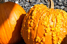 Two Orange Pumpkin Gourds For ...