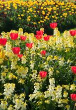 Flowerbeds On The Mall In Springtime Near Buckingham Palace. London. England. UK.