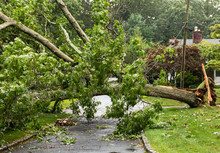 Fallen Tree Takes Wires Down With It During Storm