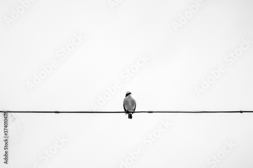 Leinwand Poster Pájaro en blanco y negro