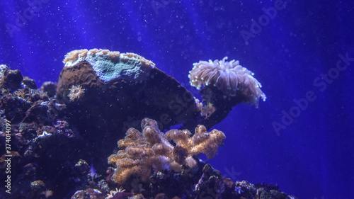 Arrecife Fototapet