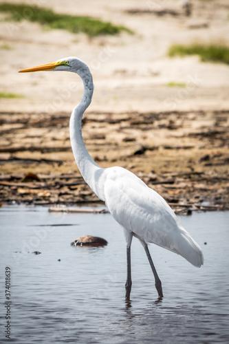 Photo Elegante ave acuatica