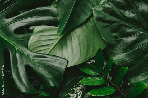 Fototapety, obrazy: Abstract green leaves nature texture background. Creative layout for design
