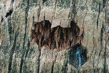 Brown Tree Bark With Hole. Background. Texture.