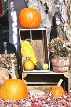 Display Of Gourds And Pumpkins