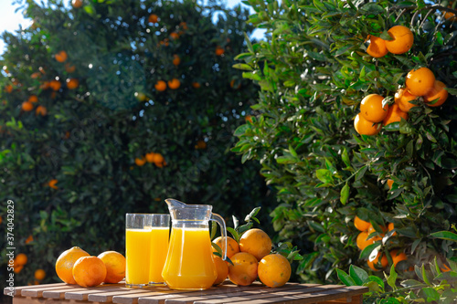 Fotografie, Obraz Fresh orange juice with fruits on wooden table with ripe oranges on trees on bac