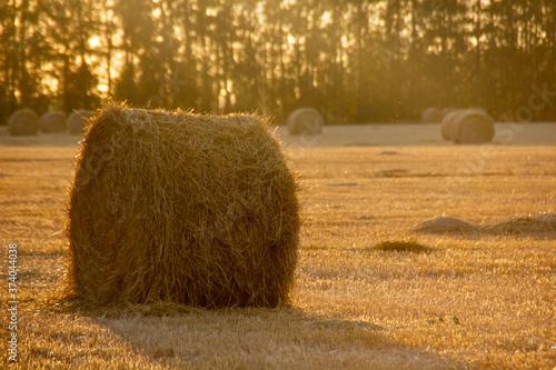 Fotografie, Obraz bale of hay