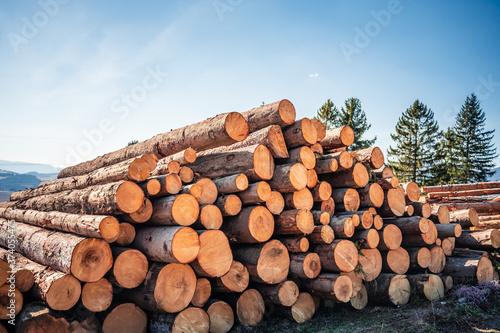 Slika na platnu Log spruce trunks pile