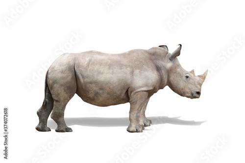 rhino isolate on white background clippingpath Wallpaper Mural