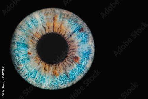 blue eye on black background Poster Mural XXL