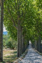 drzewo natura widok gałęzie widok