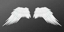 Paired Angel Or Bird Wings Tem...