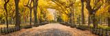 Fototapeta Nowy Jork - Central Park in autumn, New York City, USA