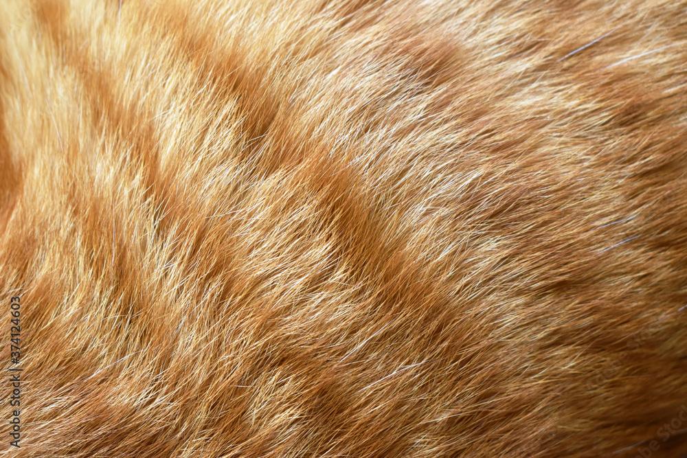 Fototapeta Ginger cat fur texture background.