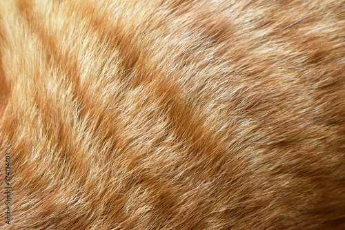 Fotografia Ginger cat fur texture background.