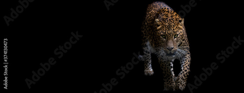 Template of a panther with a black background Fototapet