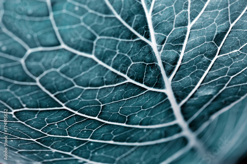 Green leaves background. Macro Leaf nature texture Wallpaper Mural