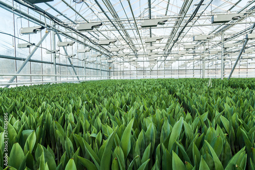 Big indsutrial greenhouse for cultivating flowers Fototapet