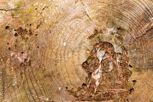 Photo texture bois fond naturel