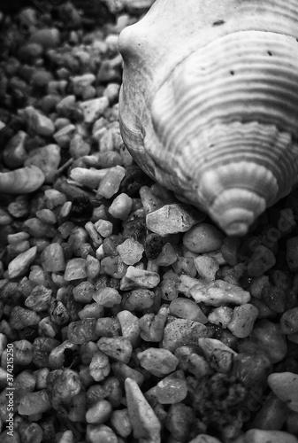 seashell on the beach Canvas Print