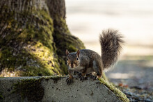 An Adorable Brown Squirrel Res...
