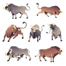 Bulls Or Buffalo, Aggressive Wild Animals, Ox Corrida