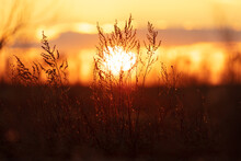Dry Grass In A Field At Sunset.