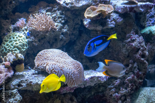 Fototapety, obrazy: Closeup of beautiful fishes in an aquarium in Osnabruck's zoo, Germany