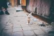 Pure little kitten on the street.