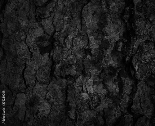 Black tree bark background Natural beautiful old tree bark texture According to Canvas Print