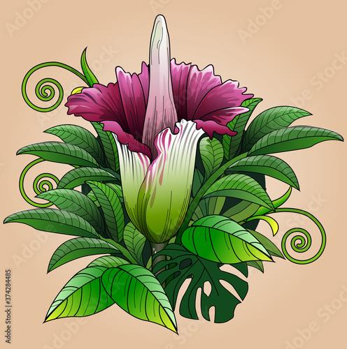Fotografie, Obraz Vector illustration, bunga bangkai or the giant carcass flower, Amorphophallus titanum, is a plant from the taro tribe (Araceae) typical of Sumatra, Indonesia